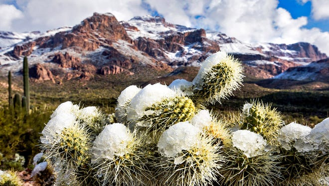A light dusting of snow covers a cholla cactus and parts of the Superstition Mountains as seen from the Lost Goldmine Trail in Gold Canyon on New Year's morning, January 1, 2015.