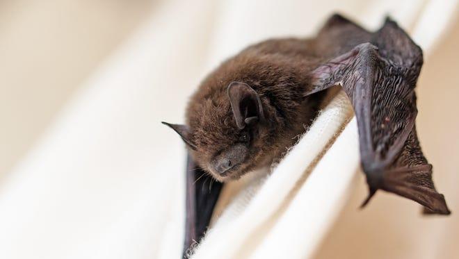An example of a bat.