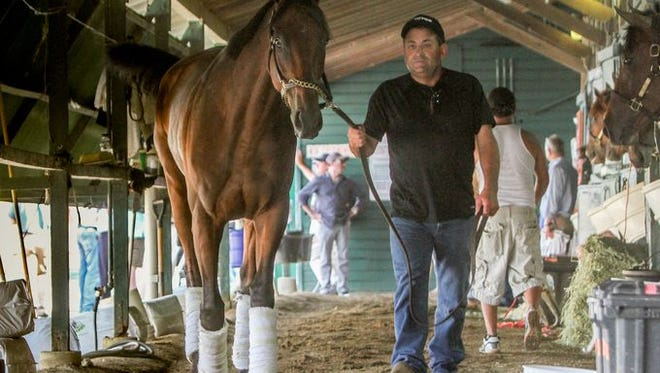 Assistant Trainer Jimmy Barnes leads the Triple Crown winner American Pharoah on its arrival to Monmouth Park for Sunday's Haskell.