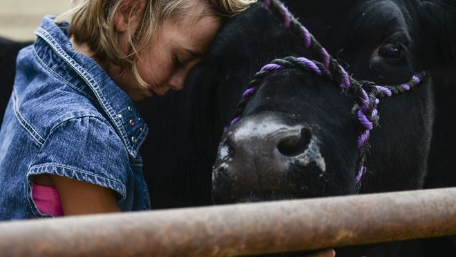 Olivia Frye, the overall grand champion market beef winner, hugs her cow Moo after he was auctioned during the Larimer County Fair Junior Livestock Sale at the Ranch-Way Feeds Livestock pavilion, Wednesday, Aug. 5, 2015, in Loveland, Colo.
