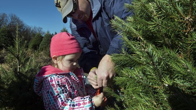 Grant Gouker, top, helps his daughter Sydney, age 2, mark their family tree at McPherson Tree Farm in Hellam Township Sunday November 15, 2015. Sydney is the great-great granddaughter of Sid McPherson