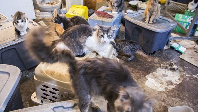 Muncie Animal Shelter employees recently removed 111 cats from a condemned home in Daleville