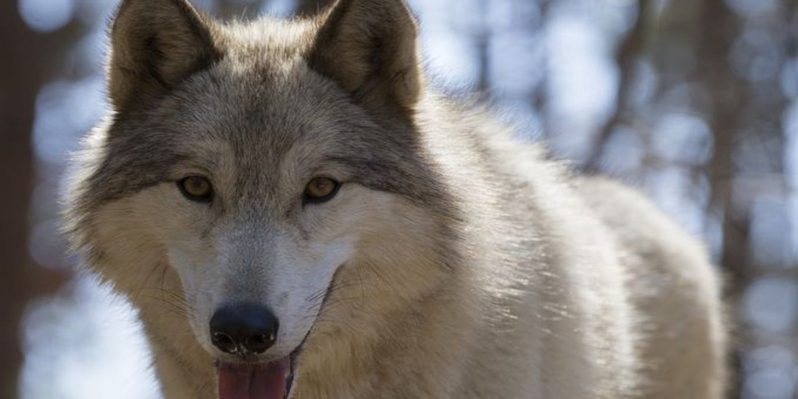Answer Man: 'Wolf dog' at park poses a threat?