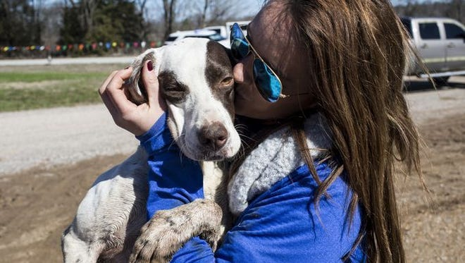 Rachel Blackwell with Coldwater Thunder, also known as Lulu, during the 118th National Championship for Bird Dogs earlier this year. Correctly interpreting the body language of dogs is key to a good relationship with them, experts say.