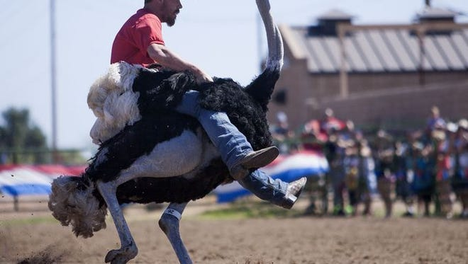 The Chandler Ostrich Festival, March 9-11, is just one of the many Phoenix area festivals this month for families.