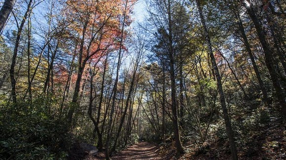 DuPont State Forest in Cedar Mountain has seen record numbers of visitors in 2014 and expects to continue climbing during the peak leaf season. Forest service employees have had to work more on forest infrastructure to keep the trails up in response to the impact record visitors is having in the forest.