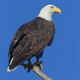 Unless you're an eagle, you need a permit to own eagle parts