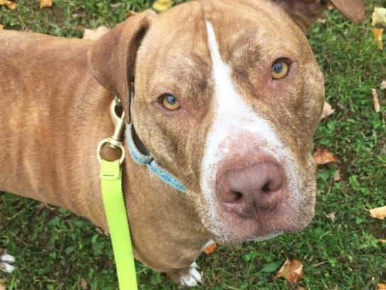 The Friends of Randolph Animal Pound will host a Comedy Night Fundraiser hosted by TV host and Comedian Justin Silver on Thursday, Feb. 22. All Proceeds benefit the many cats and dogs, like Bueller, pictured here, of the Randolph Regional Animal Shelter.