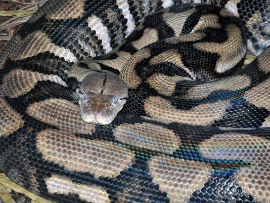 635497424662604173-mom-snake-1