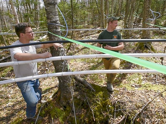 Nikita Salmon of Sap!, a maple beverage company in Middlebury, left, visits a birch sugarbush with Brian Heffernan in Starksboro on Thursday, April 28, 2017.  Sap! makes birch sparkling water from birch sap sourced in part from the Heffernan Family Sugarworks.