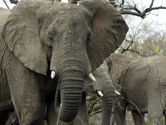 AFP SAFRICA-IVORY-ENVIRONMENT I CON ZAF -