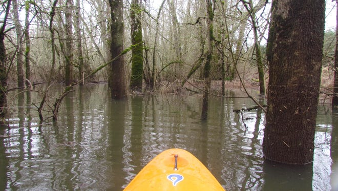 When the Willamette River rises high enough, you can kayak into the flooded forest on Minto Island in Salem.