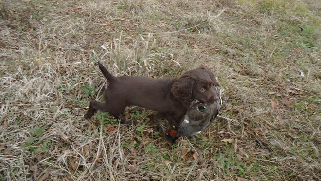 Teal season begins later this month.