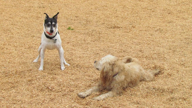 Stayton Community Dog Park has a number of features, including a sawdust ground cover, water fountain and cyclone fencing with separate areas for large and small dogs.