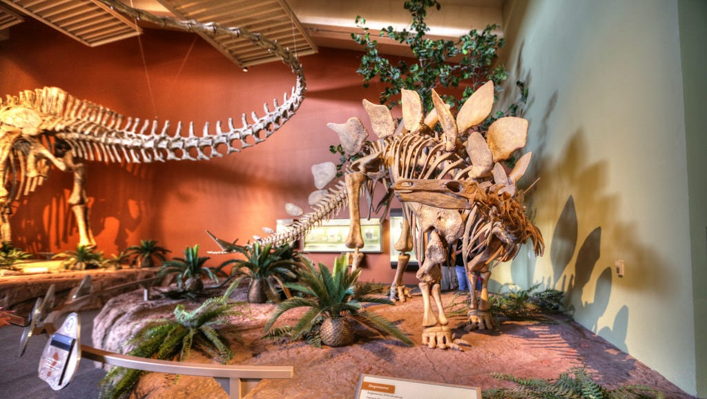 New Mexico Museum of Natural History & Science, Albuquerque: One of the city's best family attractions, the New Mexico Museum of Natural History & Science, walks guests through 12 billion years of natural history. The full-sized skeletons are a big hit, as is the Evolator, a time-travel simulation that takes you back in time to walk with the dinosaurs.