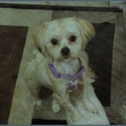 Roo, a Maltese/Yorkie mix was taken from a backyard