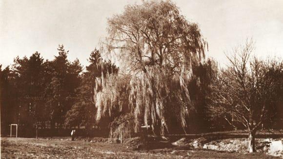 042912-sub-Willow-tree