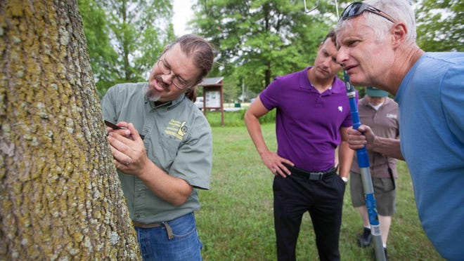 Jimmy Kroon (left), state survey coordinator with the Delaware Department of Agriculture, is joined by Newark community affairs officer Ricky Nietubicz (center) and Newark's superintendent of Parks and Recreation as they examine an ash tree.