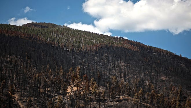 The site of the San Bernardino National Forest's northwestern region post-Lake Fire will undergo a lengthy process of wildfire rehabilitation. Assessed by scientists of the U.S. Forest Service Burned Area Emergency Response Team, potential post-wildfire risks, such as flooding, are highest on 650 acres of the affected region.