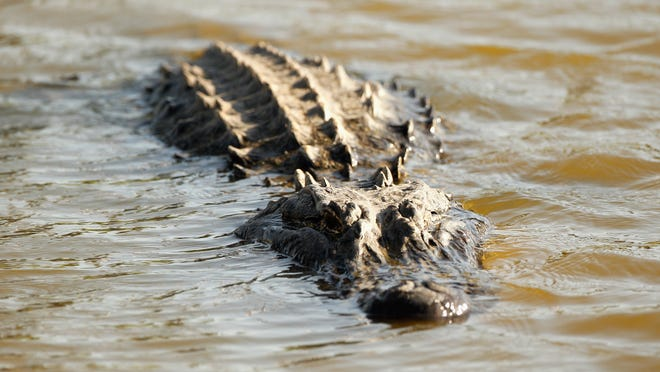 U.S. Rep. Todd Rokita contributed $5,000 to a Louisiana attorney general candidate's campaign to go hunting for alligators.