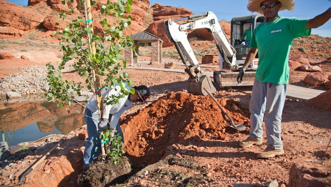 Landscapers plant trees at the Red Hills Desert Garden on Wednesday.