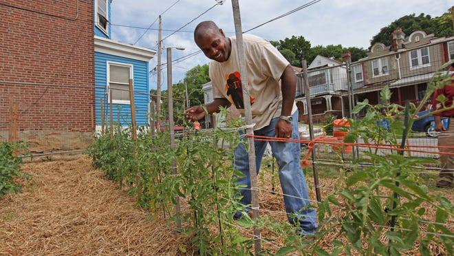 Matthew Williams, executive director of Conscious Connections Inc., shows off tomatoes growing in the new community garden on East 23rd Street.