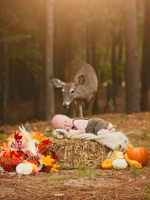 Megan Rion of Lake Charles, La., was shooting a 1-month-old baby in Sam Houston Jones State Park on Oct. 20, when a curious deer crashed the photo shoot.