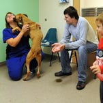 Fairfield County dog shelter helps 'the forgotten'