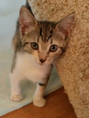 Look at this precious baby kitty!
