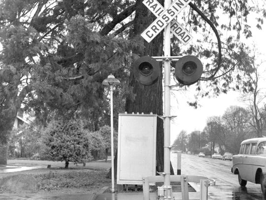 A railroad crossing sign is seen in front of the sequoia