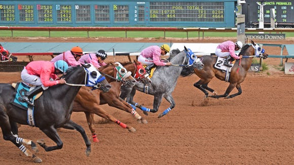 Apollitical OK wins the featured race at Ruidoso Downs on Saturday.