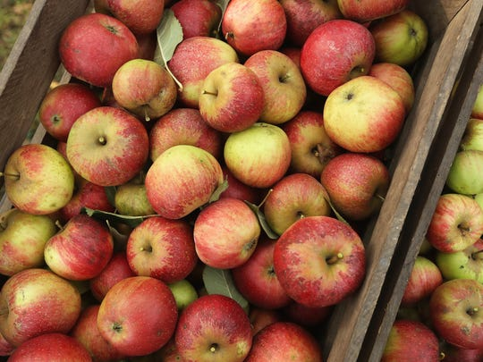 Freshly-picked apples are an iconic sign of fall.