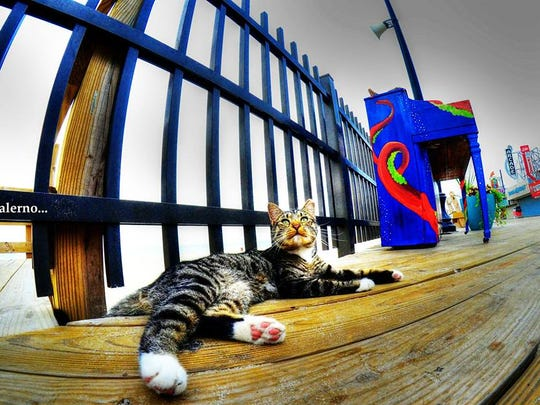 A cat rests on the Seaside Heights boardwalk. The borough is considering moving cats from the boardwalk.