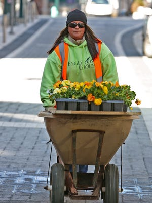 Rose Croasmun moves flats of pansies down Georgia St. as she helps plant some of the 8400 pansies in the 227 downtown planters, Monday, April 3, 2018.  Downtown Indy, Inc. partnered with Engledow Group for this beautification plan planting the blue, citrus, yellow and white pansies to welcome visitors throughout the coming season.