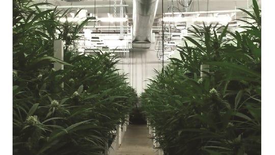 Medical marijuana growing room (Courtesy of Butler
