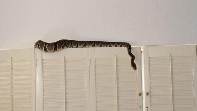 Dr. Mary Kay Brewster put a ball python in her estranged husband's home while stalking him.