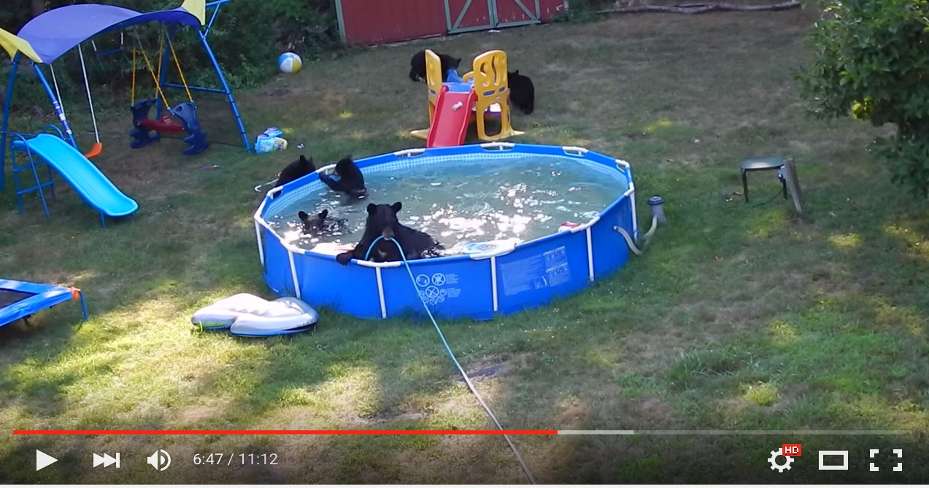 Bear family beats the heat with swim in n j family 39 s pool for Bears in swimming pool new jersey