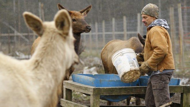 Rick Ewert feeds his elk at Hemlock Hills Trophy Ranch in Medford.