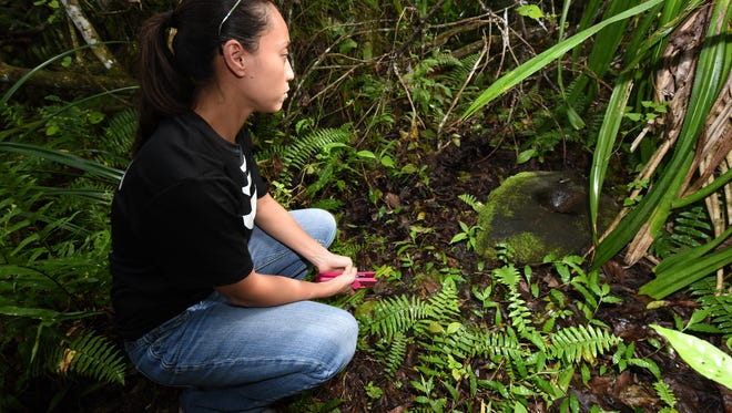 Sen. Régine Biscoe Lee pauses for a moment near an ancient lusong, or Chamorro stone mortar, located in the jungles of the Naval Computer and Telecommunications Site at Finegayan, Dededo on Oct. 5, 2017.