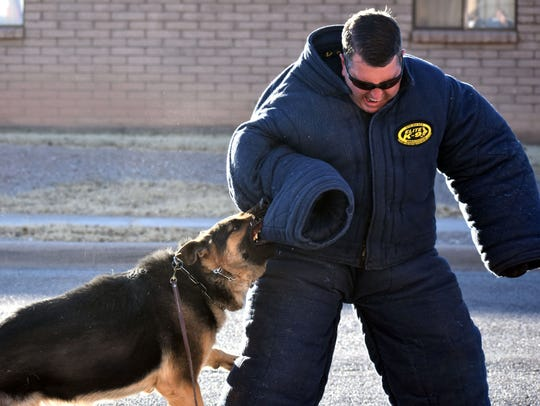 K9 Sgt. Chris Hughs is taken down by K9 Brutus during