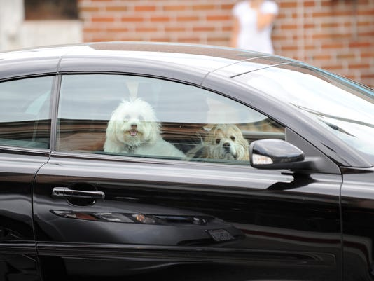 cnt dog cruelty