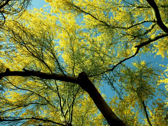 In Arizona, many trees can tolerate the summer months