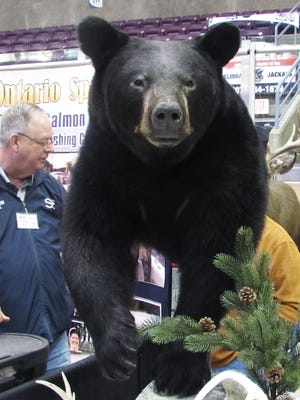This black bear mount by Fins 'n' Feathers Taxidermy Studio greets visitors as they walk around First Arena in Elmira during last year's Twin Tiers Outdoor Expo.