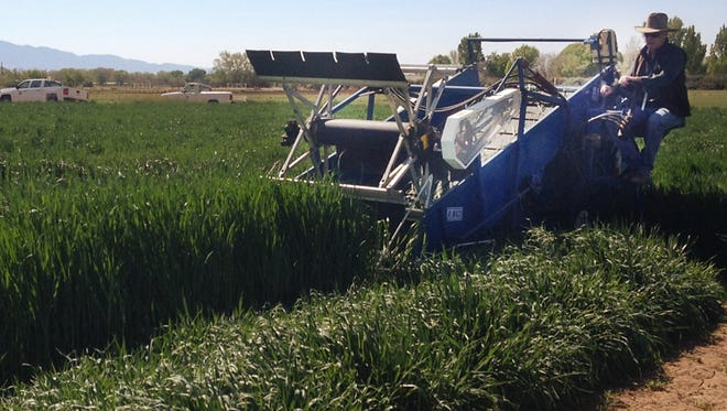 New Mexico State University conducts forage crop research at its Agricultural Science Center at Los Lunas and Tucumcari. Forage crops are ranked third in the state's agriculture crop categories.