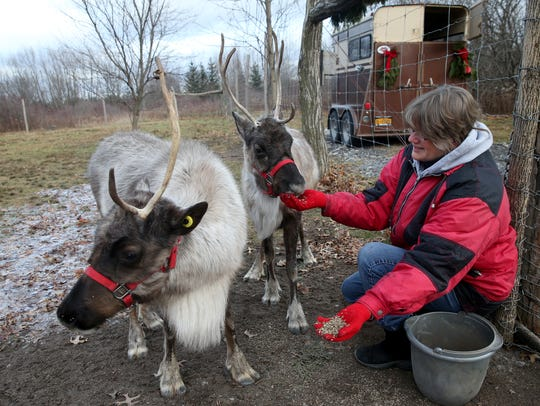 """Lisa Schaertl feeds her reindeer, Moose and Little Buddy, in their 2-acre enclosure on their """"hobby"""" farm in Shortsville, Ontario County."""