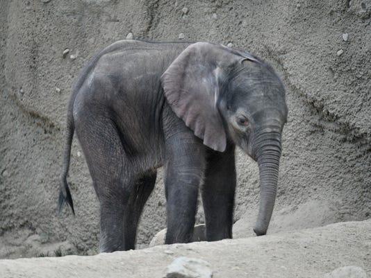 -14_elephant.189005.JPG_20120709.jpg