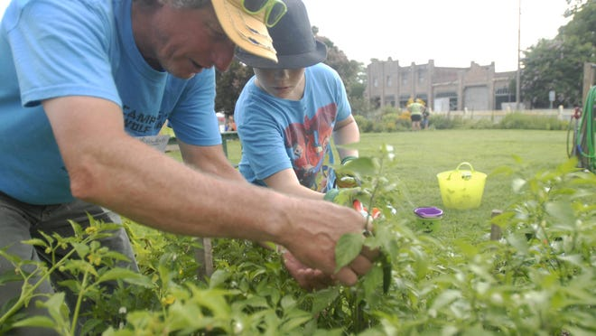 New Roots Youth Garden volunteer Phil Goetkin, left, helps a participant in the Summer Open Garden Club harvest a serrano pepper Thursday, July 23, 2015 in Cape Charles. The free club is sponsored by New Roots Youth Garden.