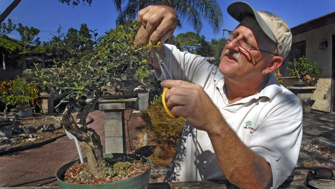 The Bonsai Society of Brevard will host the event in the Nyami Nyami River Lodge at Brevard Zoo, 8225 N. Wickham Road, Melbourne, from 10 a.m. to 4 p.m. and today. The exhibit is free with zoo admission, which is $16 for adults, $15 for seniors and $12 for kids ages 2-12. Call 321-254-9453.