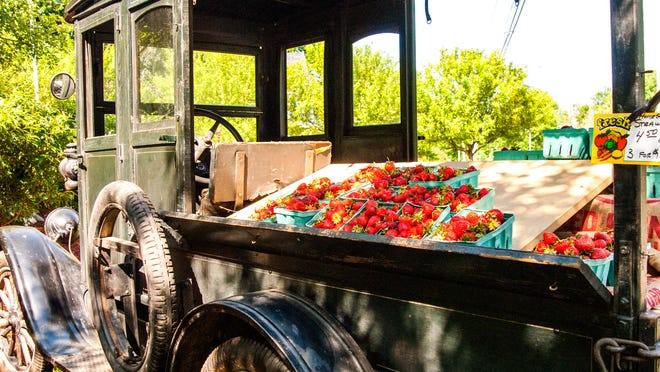This 1926 Ford Model T equipped with a produce bed would have been called a huckster travelling up and down city streets hawking the produce of the day. Today it is owned by John Testa on Chili Avenue and is in working order.