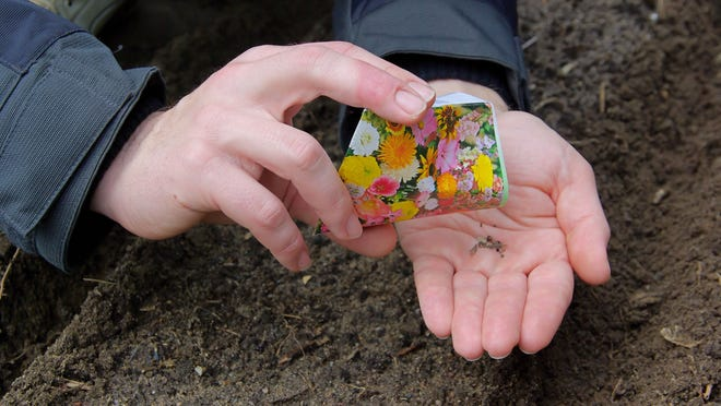 Never leave leftover seed packets outside in the garden or garage or in an unheated outdoor shed, because high humidity and dampness will damage them.